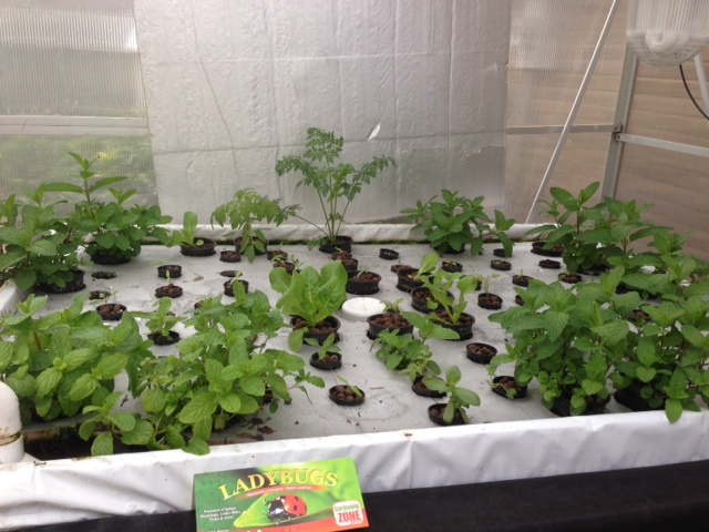 AAF Aquaponics Project