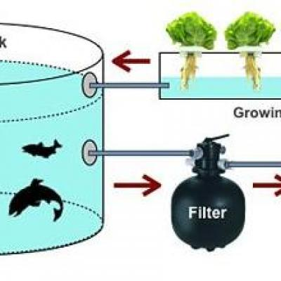 Aquaponics System With Filter