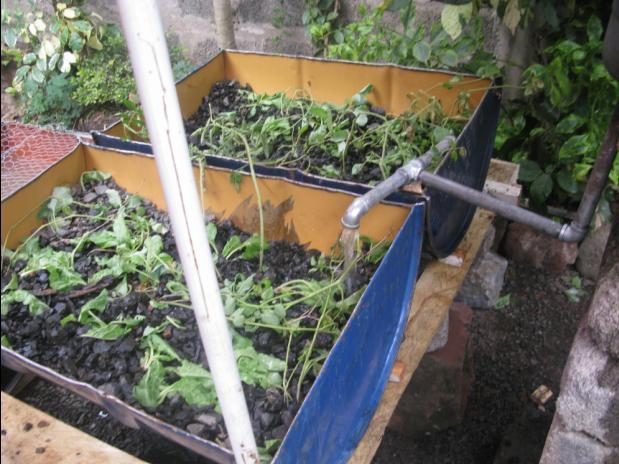Pilot Aquaponics Project - Kisumu